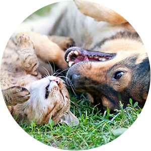 Cat and Dog Rolling in Grass